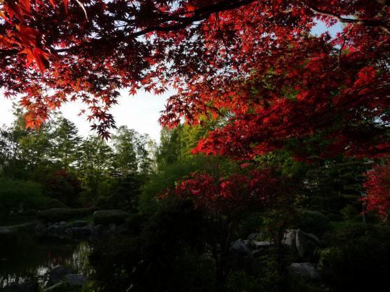 2010029春紅葉3.jpg