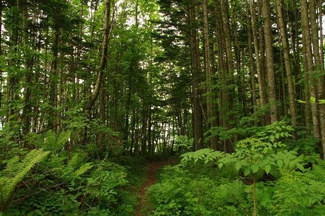 20110622支笏湖12.jpg