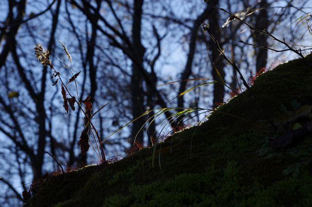 2011年11月11日支笏湖6.jpg