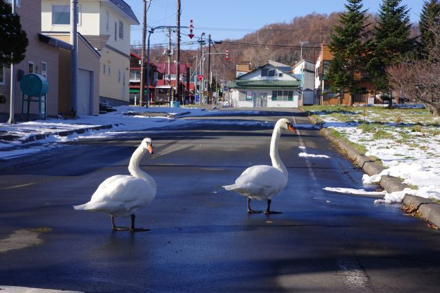 2011年12月2日洞爺湖13.jpg