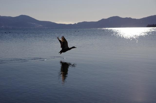 2011年12月2日洞爺湖16.jpg