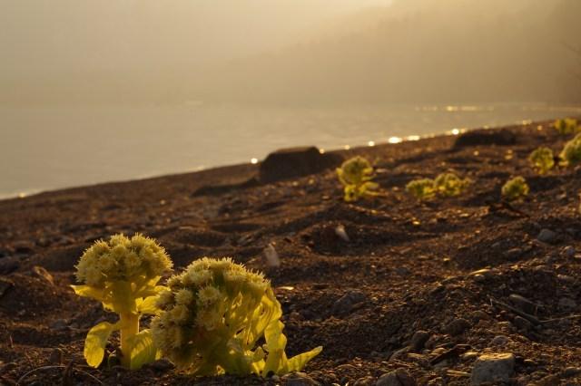 2011年4月14日支笏湖9.jpg