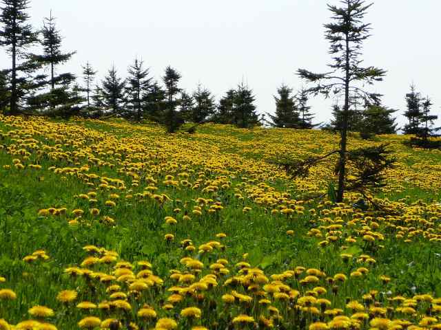 2011年5月26日モエレ沼公園2.jpg