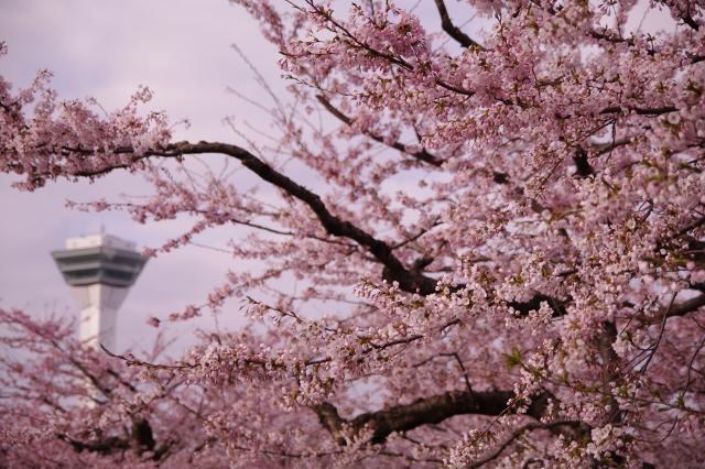 2011年5月5日五稜郭公園am7.jpg
