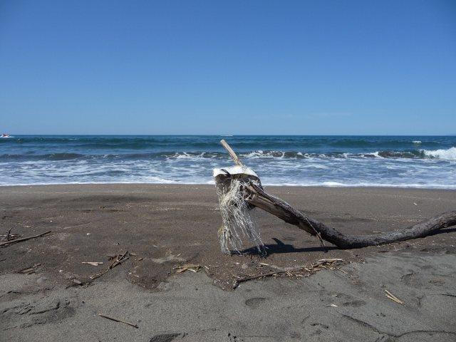 2011年8月13日海3.jpg