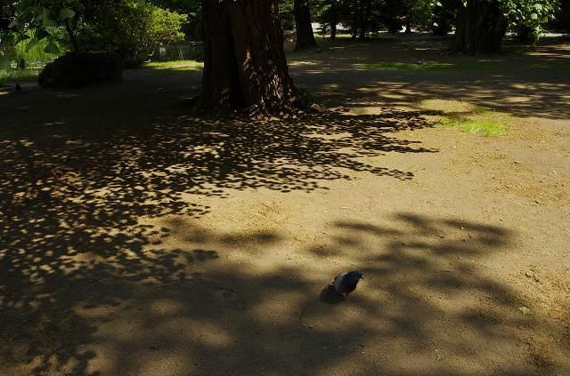 2012年6月28日の道庁敷地内13.jpg