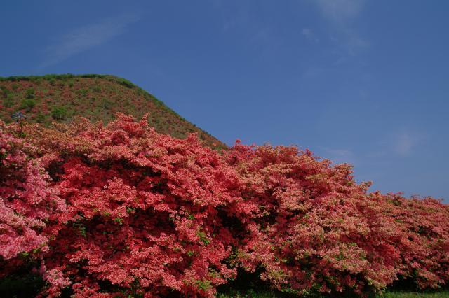恵山-つつじ2011年6月7日-11.jpg
