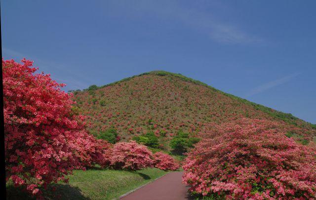恵山-つつじ2011年6月7日-12.jpg