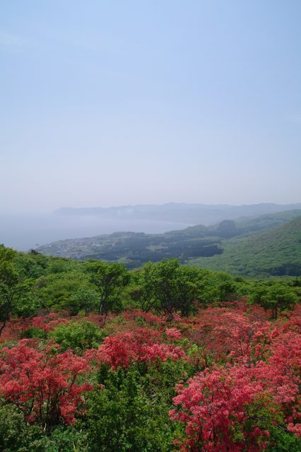 恵山-つつじ2011年6月7日-8.jpg