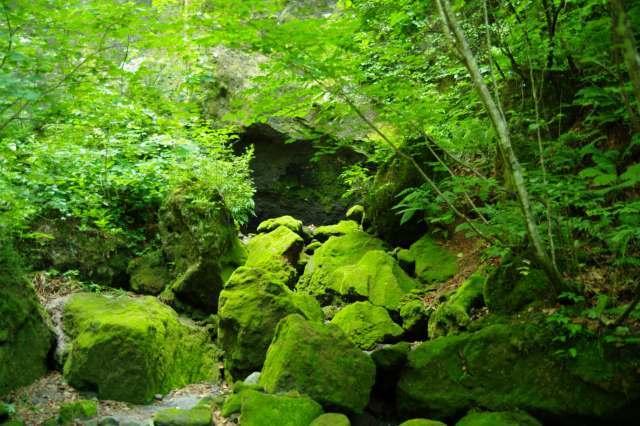 20100806苔の洞門6.jpg