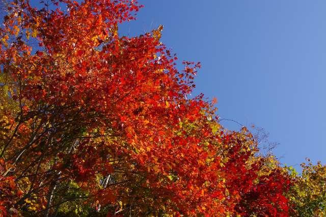 2011年10月20日15支笏湖12.jpg