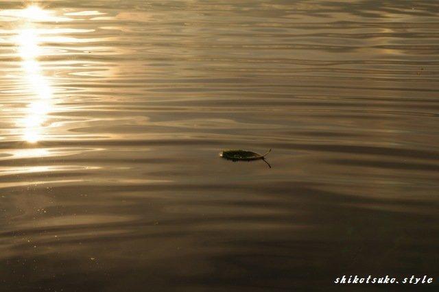 2011年7月6日支笏湖8.jpg