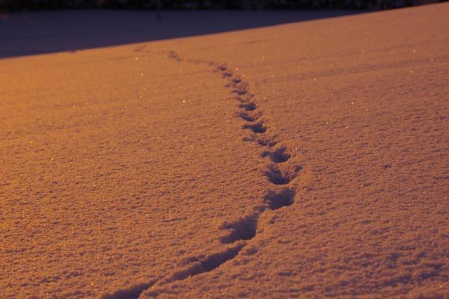 2012年1月20日モエレ沼公園12.jpg