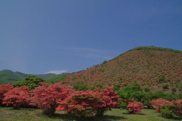 恵山-つつじ2011年6月7日-1.jpg
