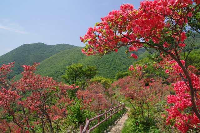 恵山-つつじ2011年6月7日-2.jpg