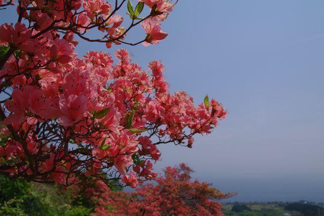 恵山-つつじ2011年6月7日-3.jpg