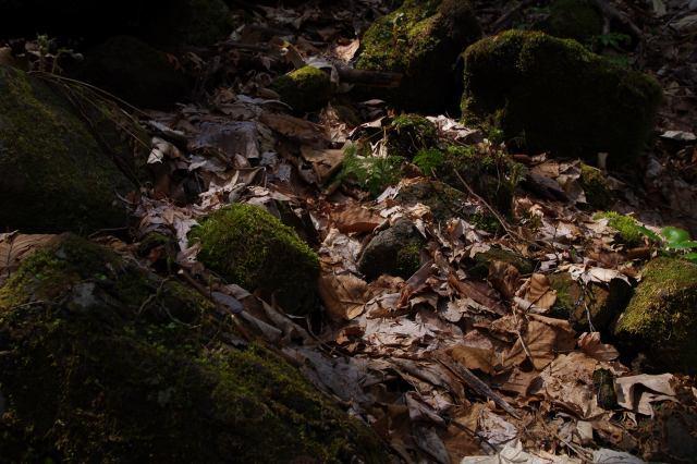 支笏湖2011年5月18日-7.jpg