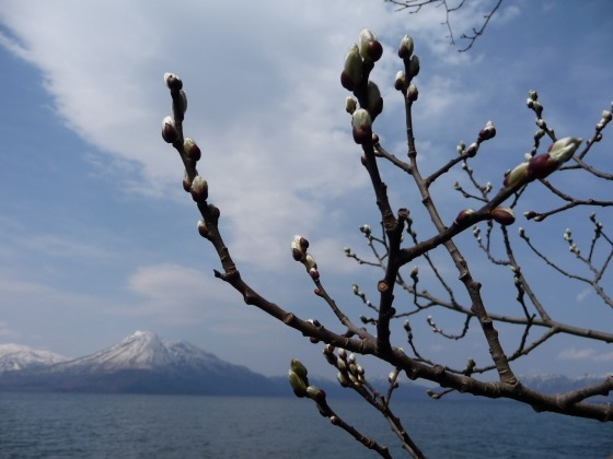 shikotsuko100502-2.jpg